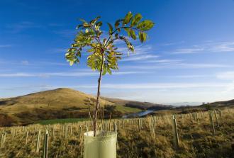 A tree sapling